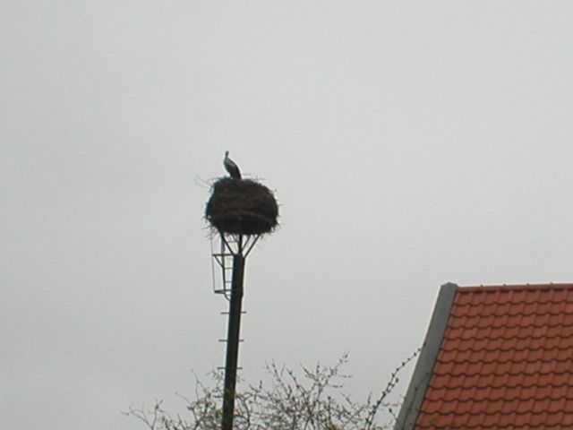 Blick auf das Nest ...